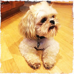 How to Remove Pet Odors and Stains from Flooring