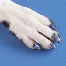 nail clip - We Love Dogs...But Your Floors May Not!
