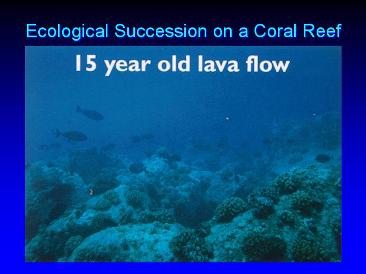 Ecological Succession On A Coral Reef