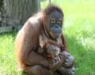 zoo-berlin_orang-utan-kind_1280x1024