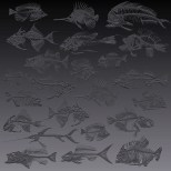Fossil fishes 2