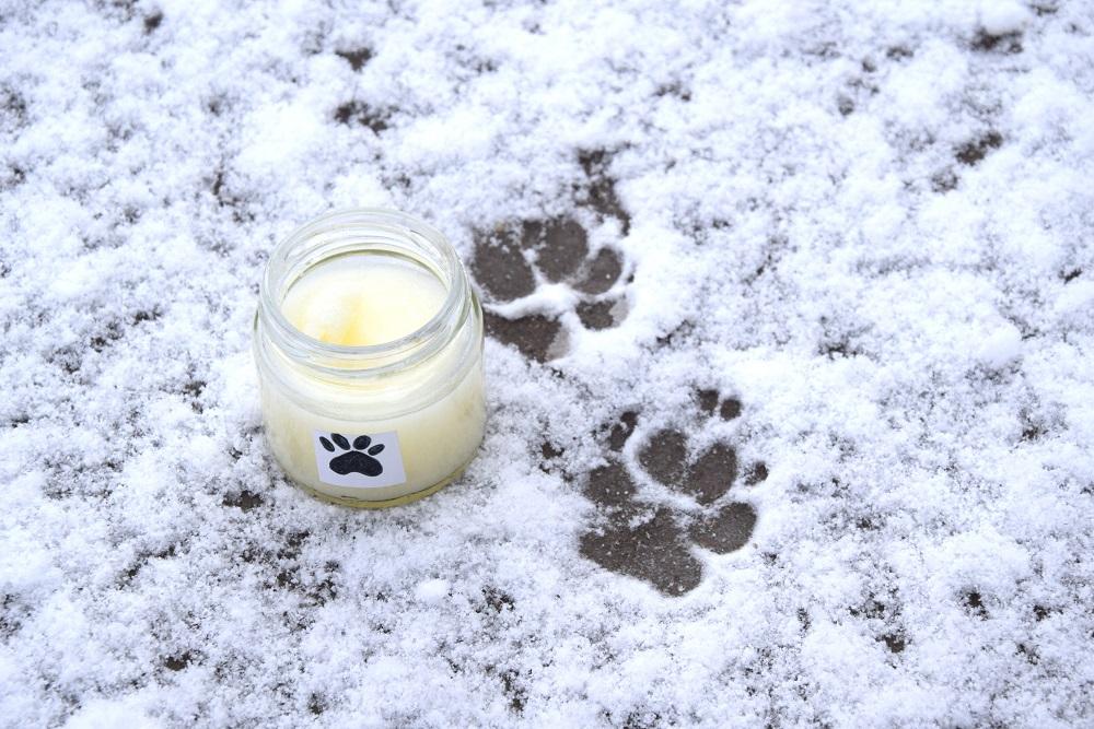Jak zrobić zimowy krem ochronny na psie łapy ? – prosty i szybki przepis
