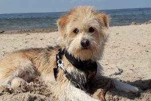 Wakacje Z psem czy POD psem? – czyli planujemy wyjazd z pupilem