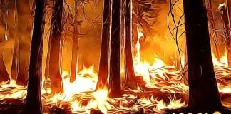 Amazonský prales - požiar