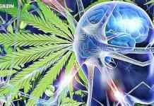marihuana nebezpecenstvo mozog