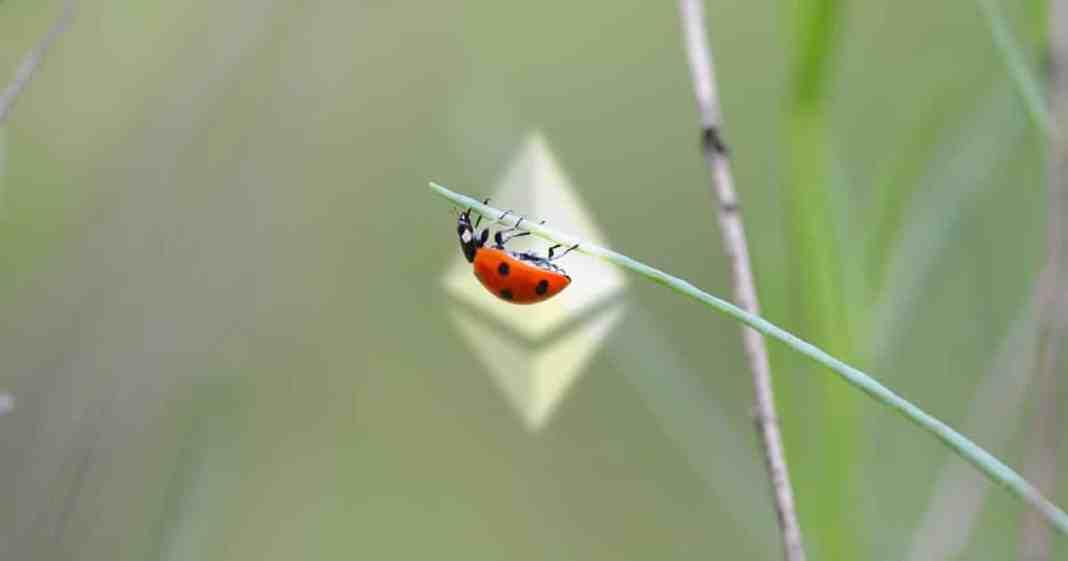 Ethereum bug