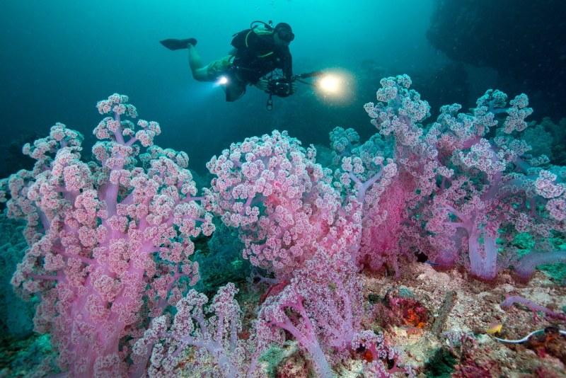 Krystal International Vacation Club Scuba Diving In Mexico (3)