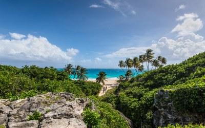 Descubre la Vida Marina de Vacaciones en Barbados