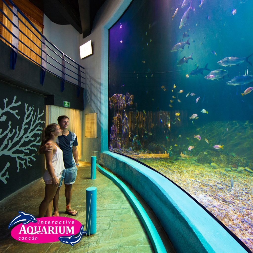 Krystal International Vacation Club Highlights Interactive Aquarium in Cancún (3)