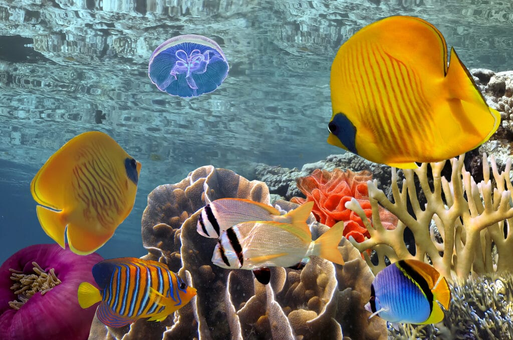 Wonderful and beautiful underwater by Krystal Cancun Timeshare