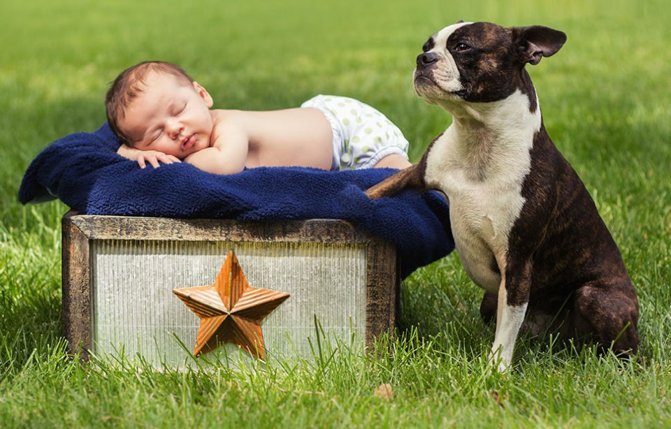 Chris Kryzanek Photography - Newborn with dog