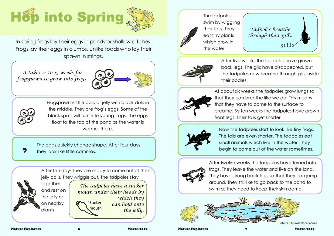 Frog S Life Cycle