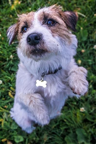 Milli can beg like a teddy!