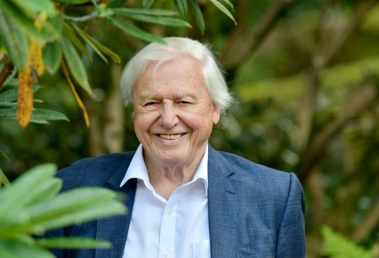 new david attenborough show