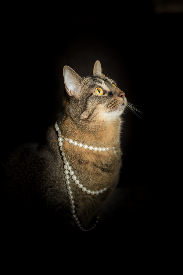 glamour cat, cat in pearls