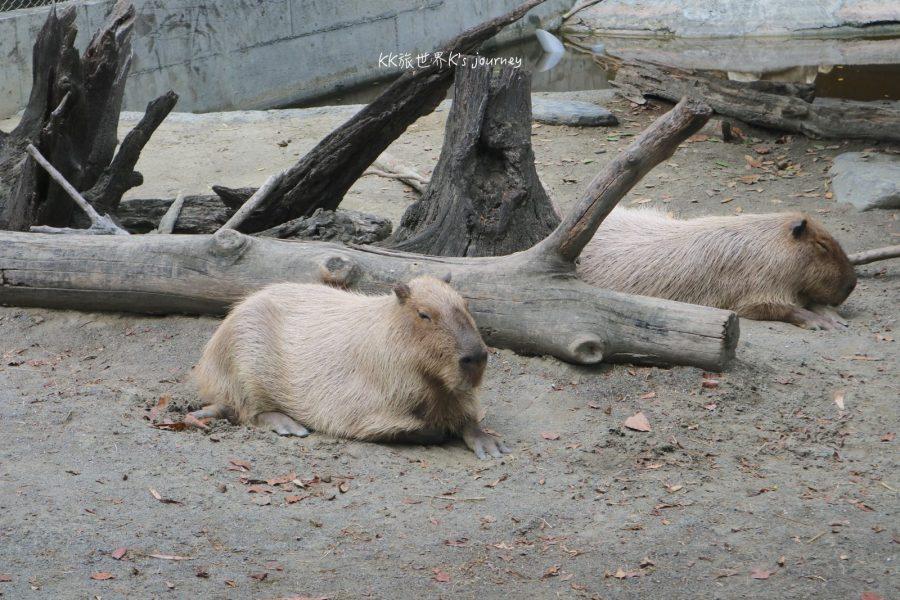 台南旅行 頑皮世界,七八年級生童年裡的那座動物園