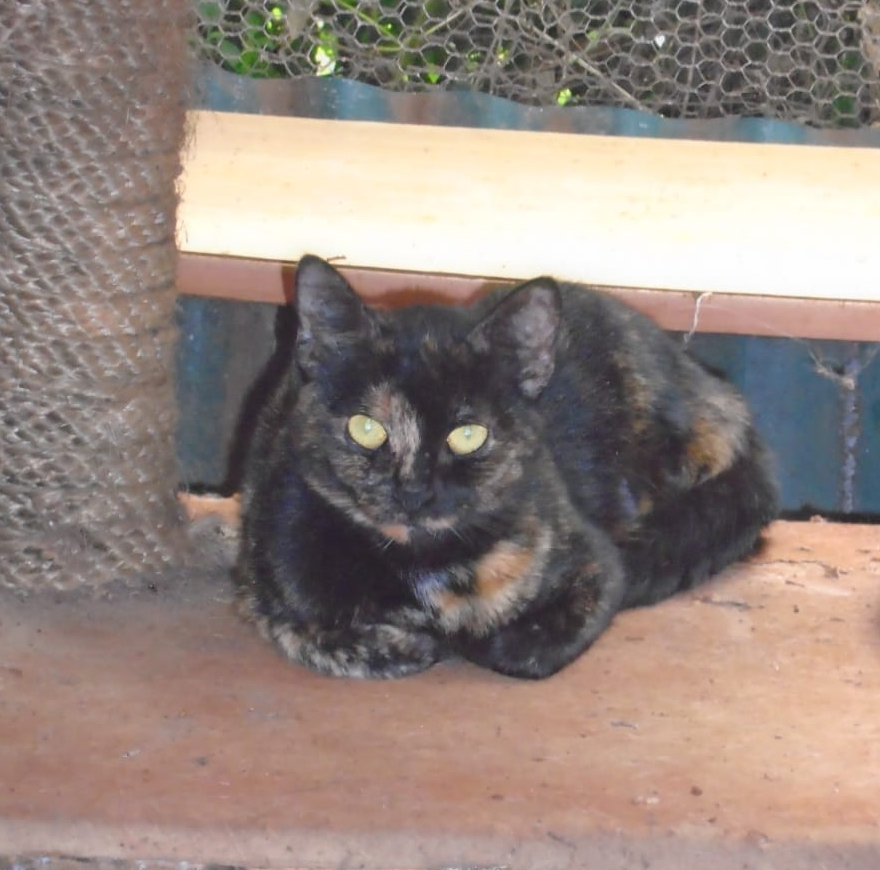 IMG-20181204-WA0006-e1544092396605.jpg?zoom=0 Stray Black Cat in Parliament Ignites Superstitions in Kenya.