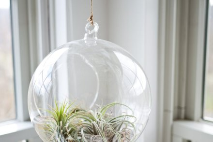 Are you taking care of the glass bowl and the plant?