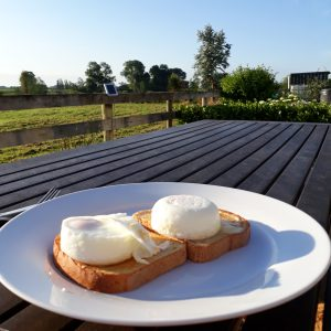Day-4 poached eggs on toast