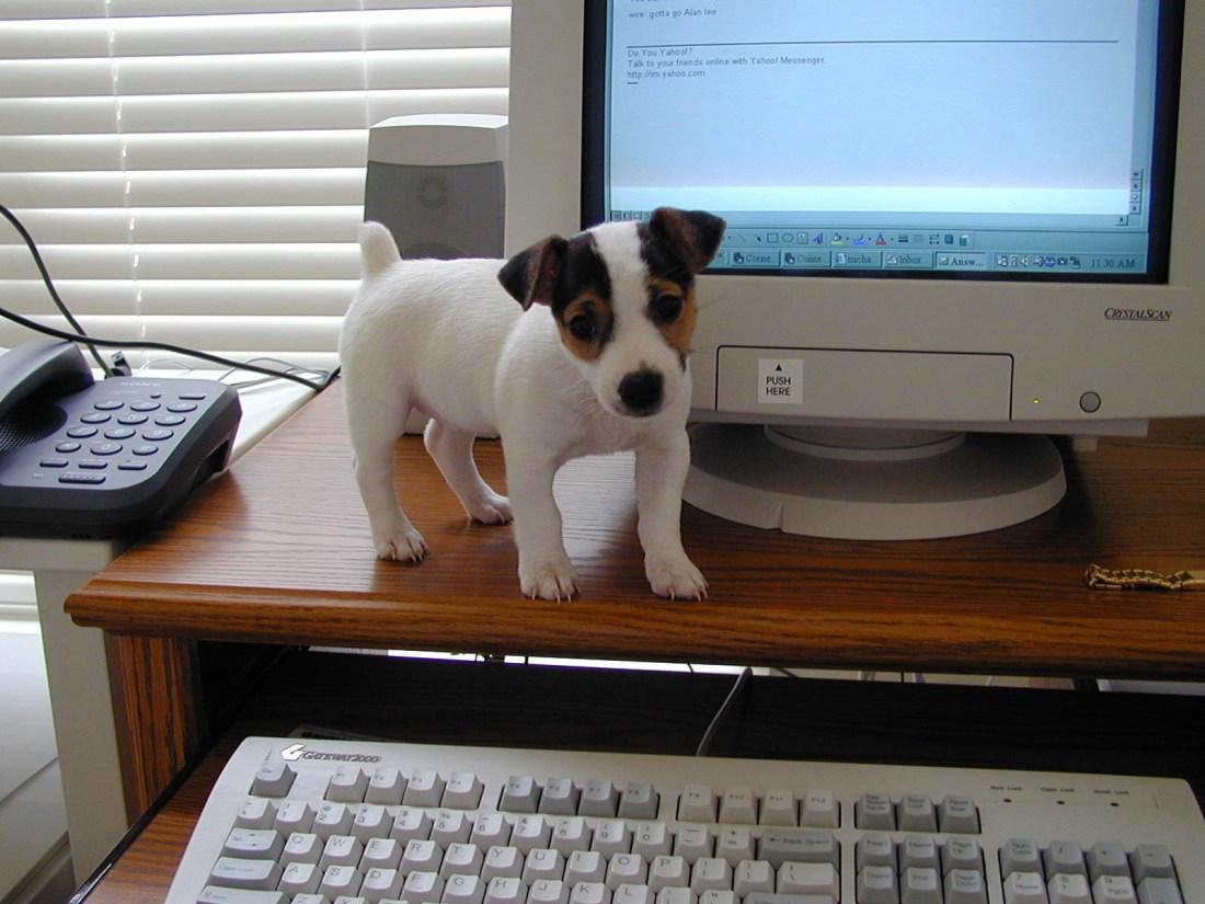 Maggie the puppy