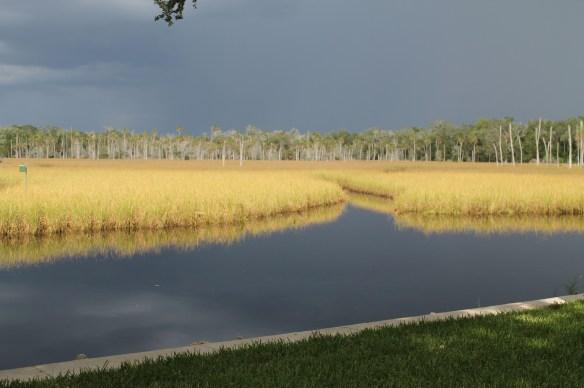 Storm over the Chassahowitzka nature preserve