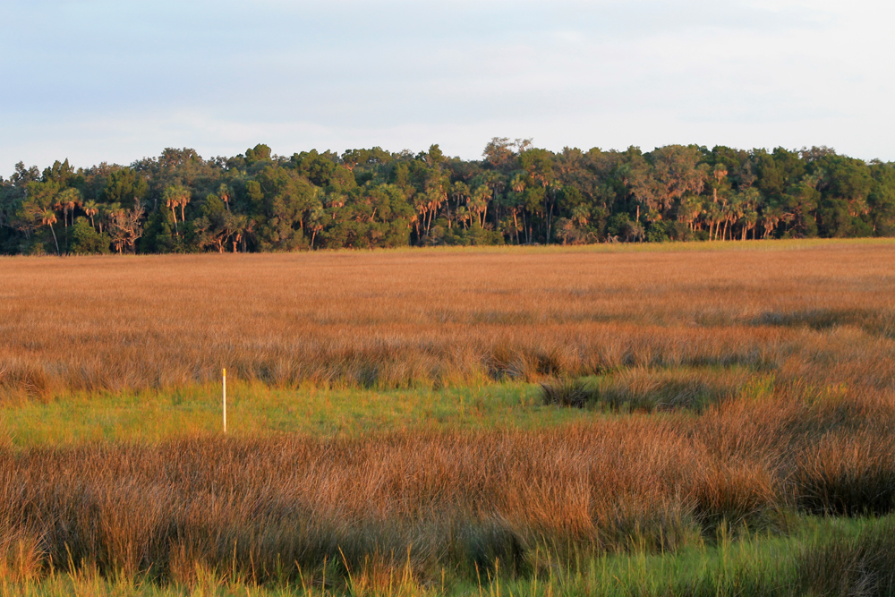 Chassahowitzka Salt Marsh Trails