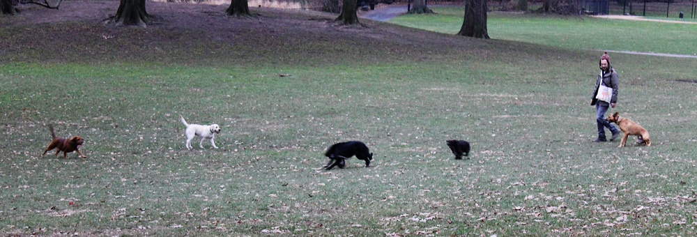 Dogs in the Hood -- Prospect Park