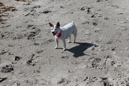Travel Dog Blog, Fort DeSoto