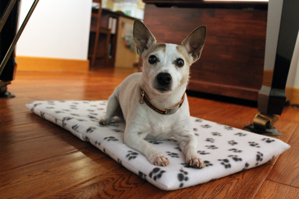 Maggie's new dog bed, Easiest DIY envelope-style pillow cover ever!
