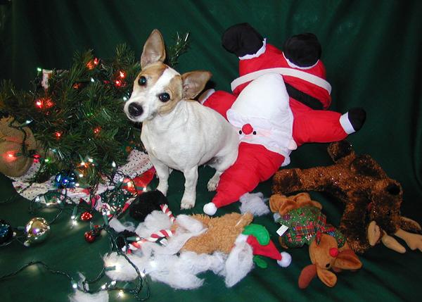2003 Maggie Christmas Card