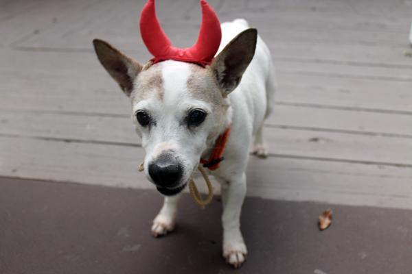 Maggie's the devil