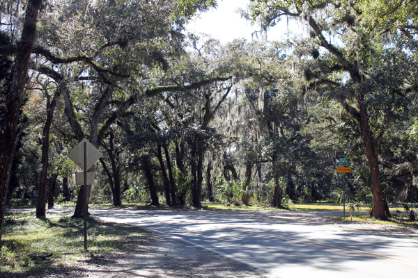 Old Homosassa trees
