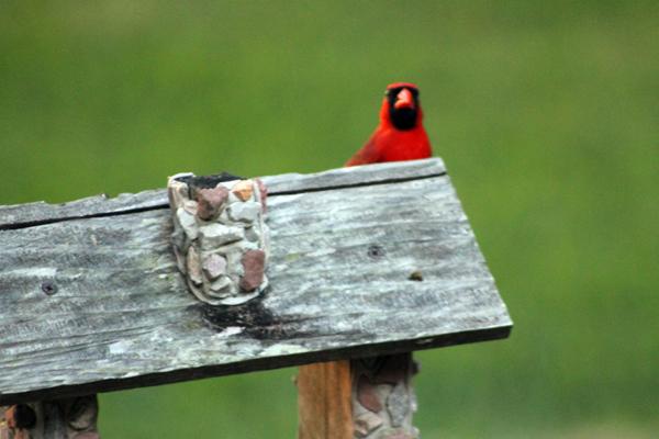 Birds in the Hood