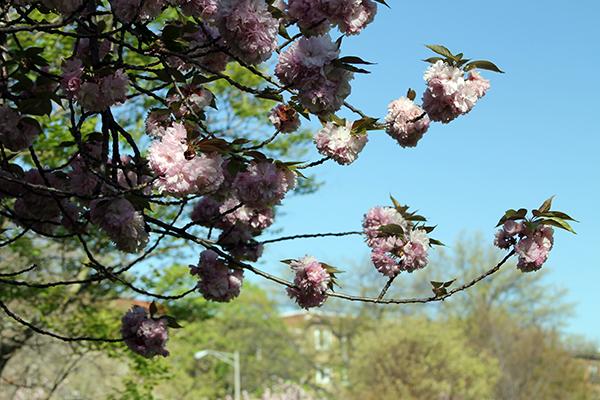 Springtime in DC
