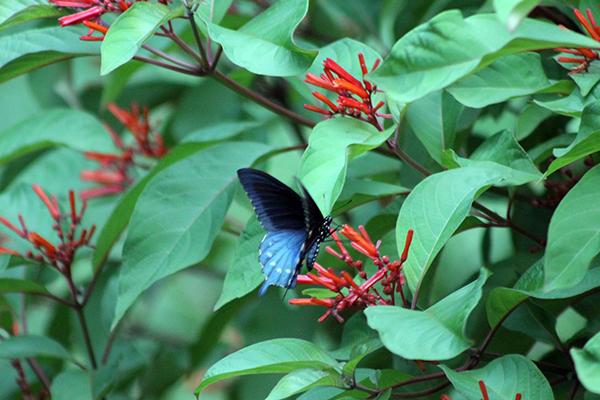 Butterfly Flutterbye