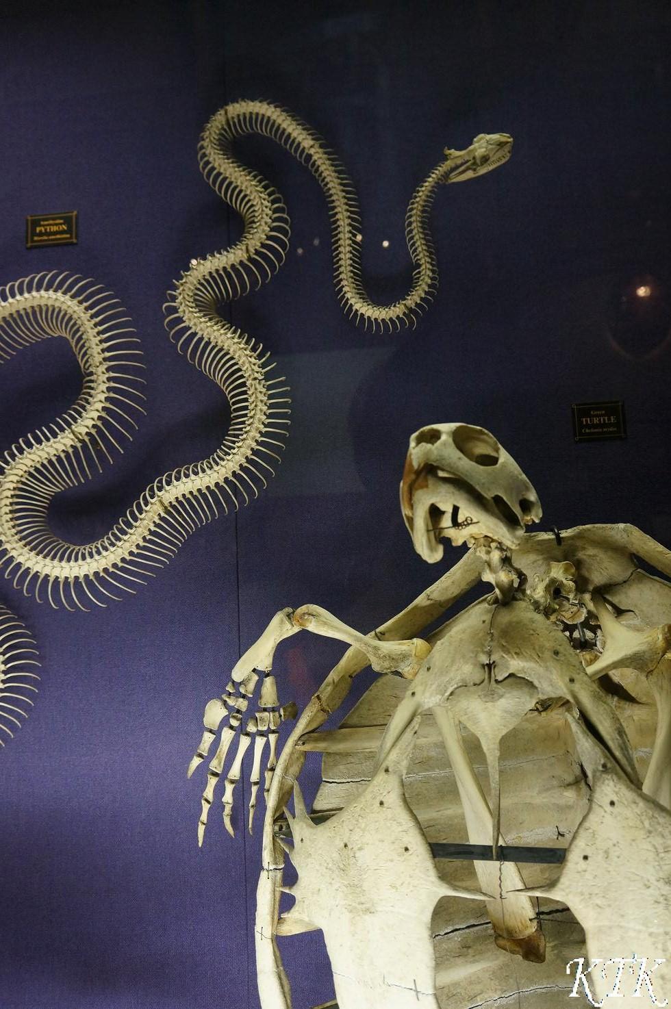 41シドニー骨の例