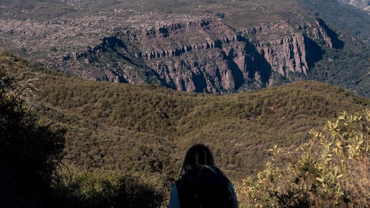 U.S. Fish and Wildlife Service biologist Joseph Brandt looks out over the Los Padres Sespe Condor Sanctuary in this undated photo. (Credit: Kent Nishimura / Los Angeles Times)