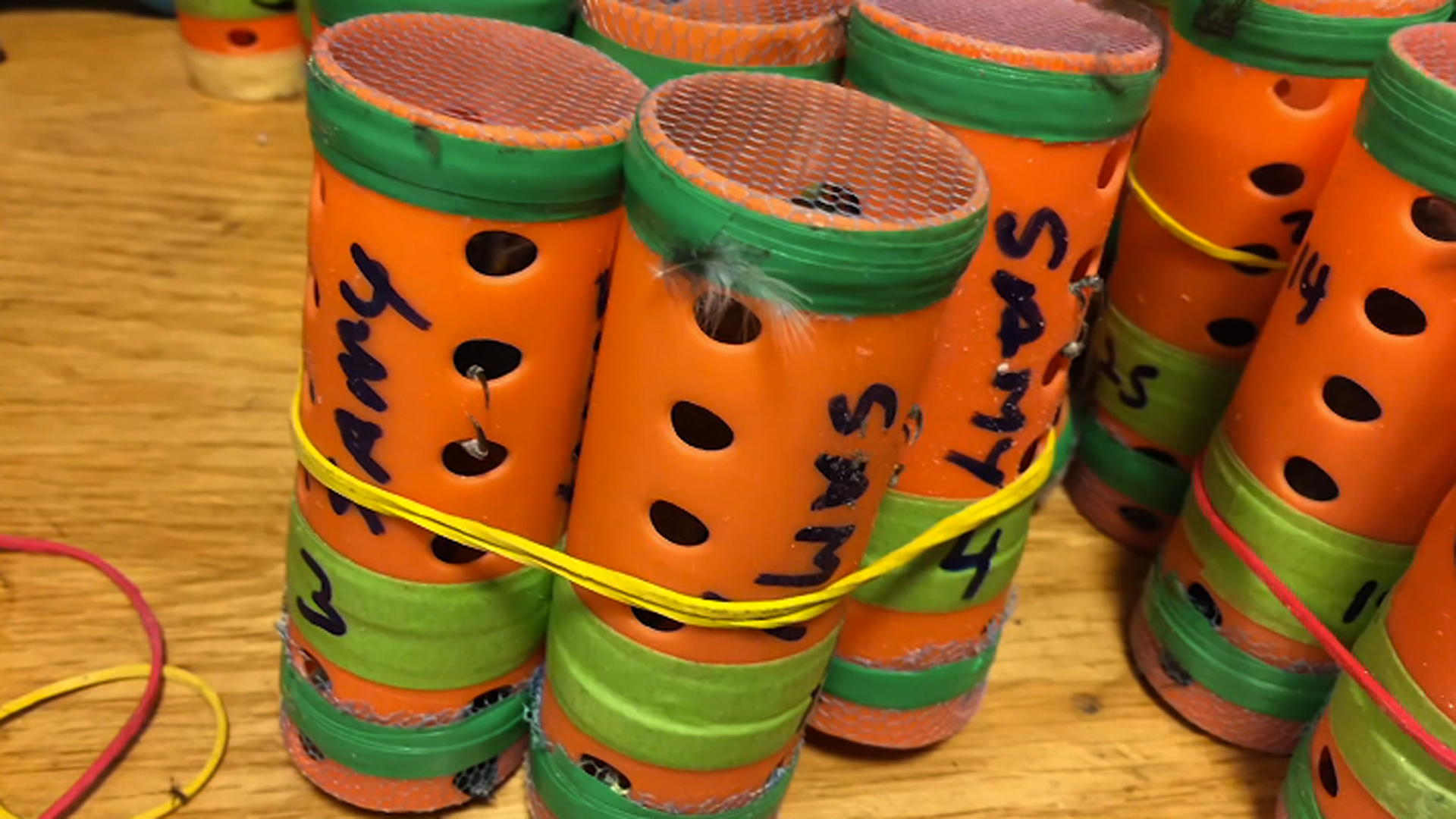 Dozens of finches were found hidden inside hair rollers at JFK Airport on Dec. 8, 2018. (Credit: (U.S. Customs and Border Protection via CNN)