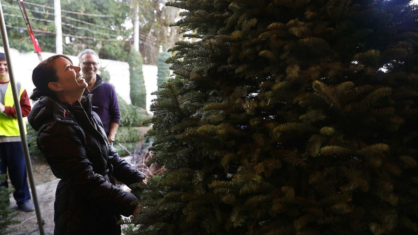 Sherri Marquez and her husband, John, shop for a Christmas tree at Todd's Christmas Trees in Long Beach on Nov. 29. (Credit: Christina House / Los Angeles Times)