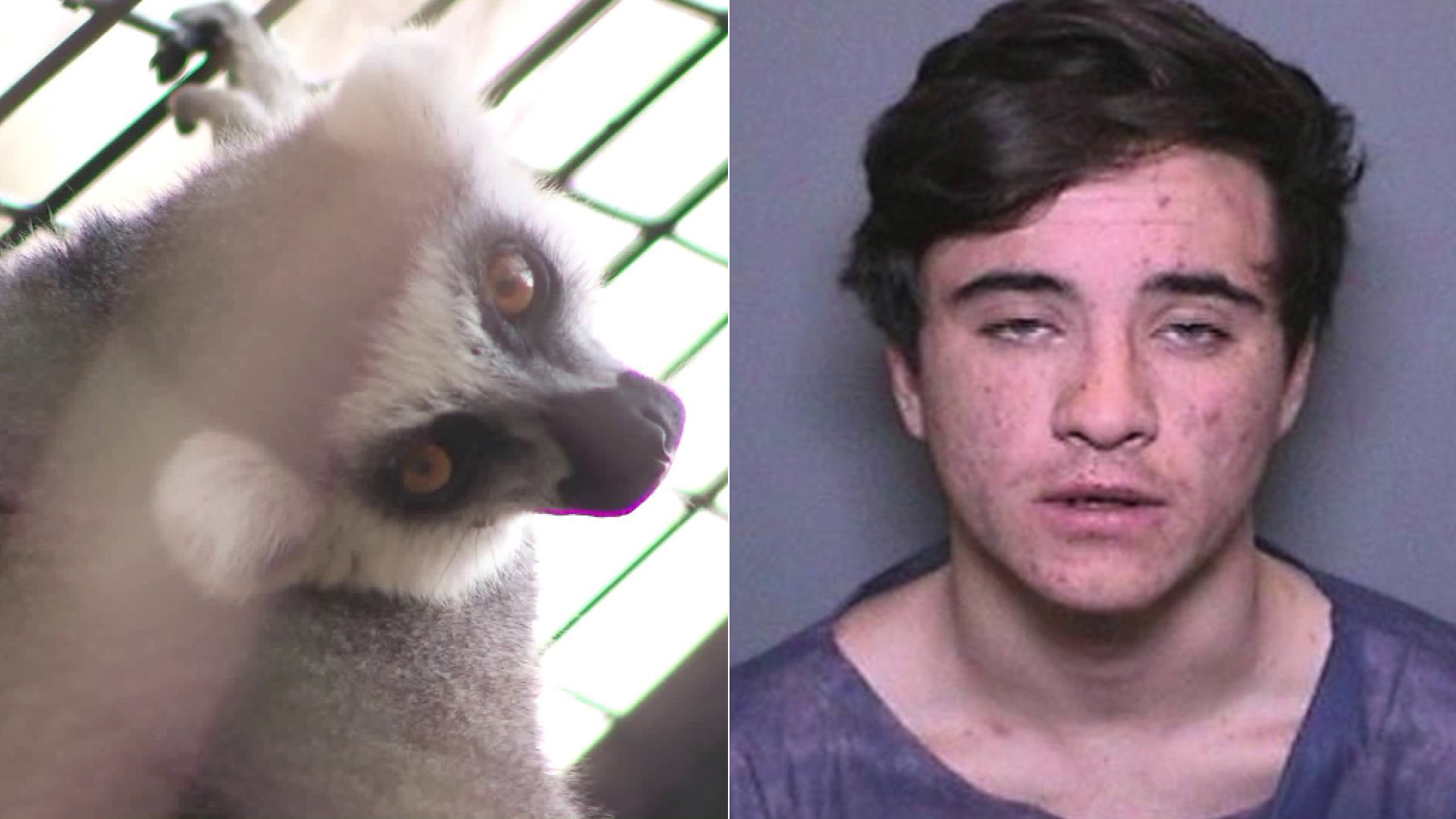 A lemur, left, was stolen from the Santa Ana Zoo last year and found abandoned at a Newport Beach hotel. Quinn Kasbar, 19, of Newport Beach, who is charged in a spate of residential burglaries, is a suspect in the lemur case, according to police. Both are seen in file photos.