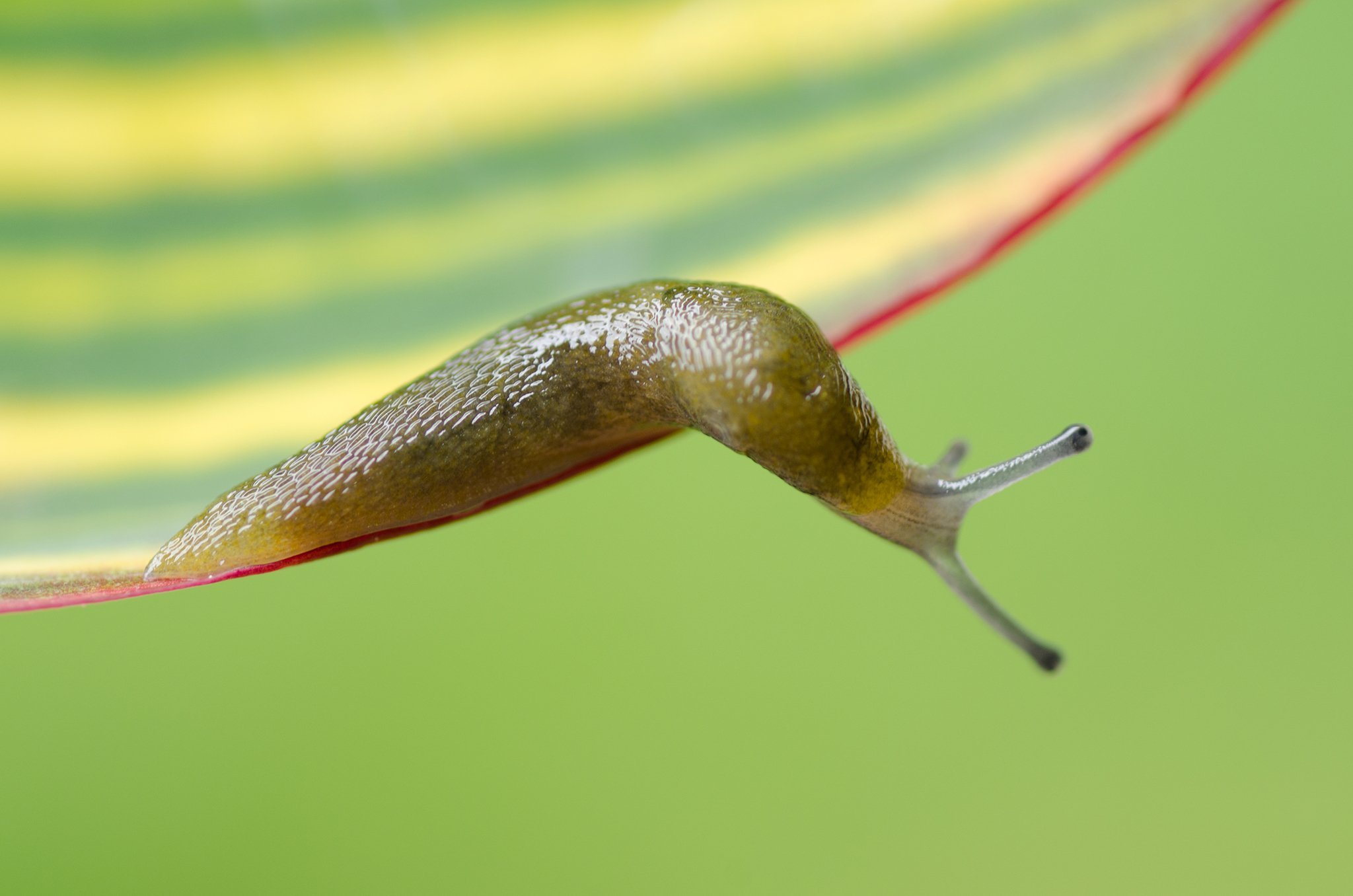 DO NOT REUSE A slug is shown in a file image. (Credit: Achille Salerni/Eyem/Getty Image)