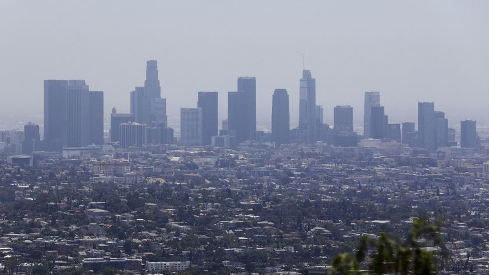 The downtown Los Angeles skyline is seen from Griffith Observatory in July 2019. (Credit: Christina House/Los Angeles Times)