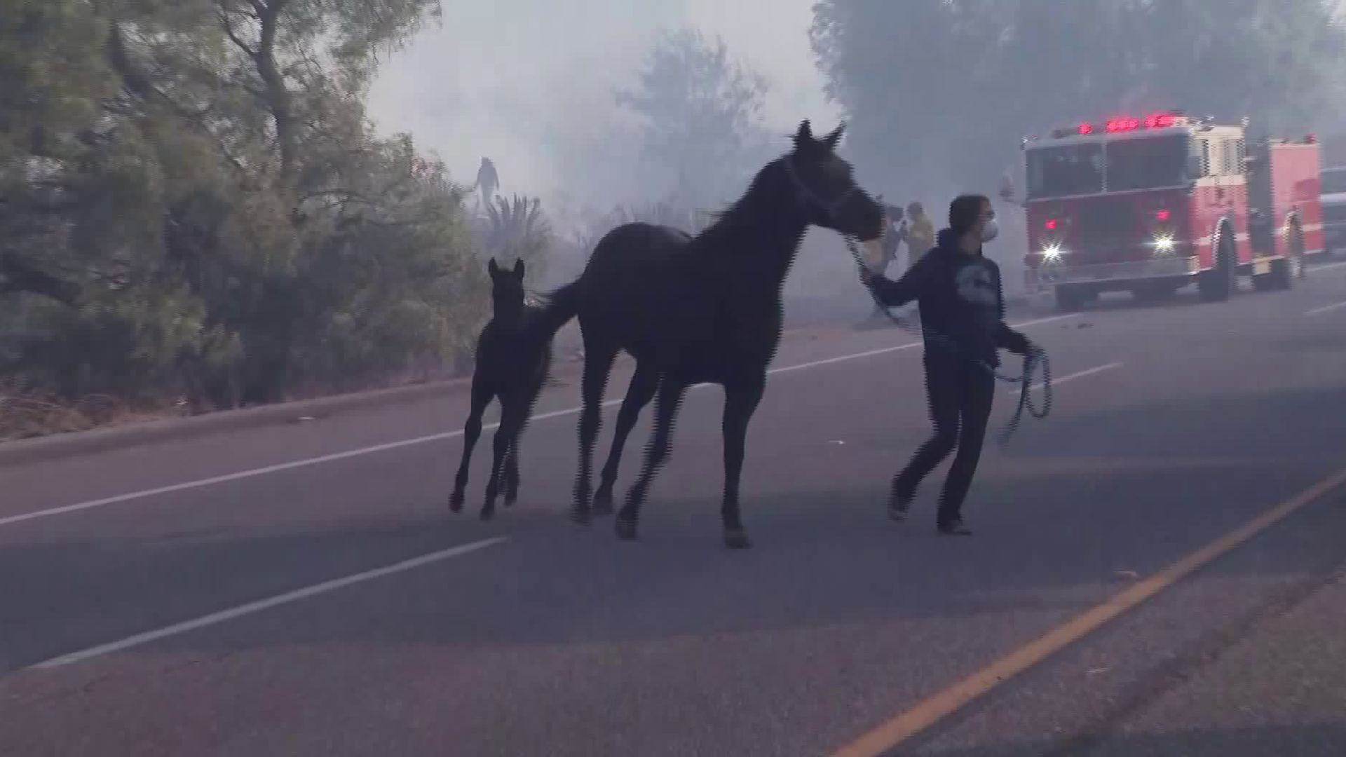 A woman leads two horses into a trailer during the Easy Fire in Simi Valley on Oct. 30, 2019. (Credit: KTLA)