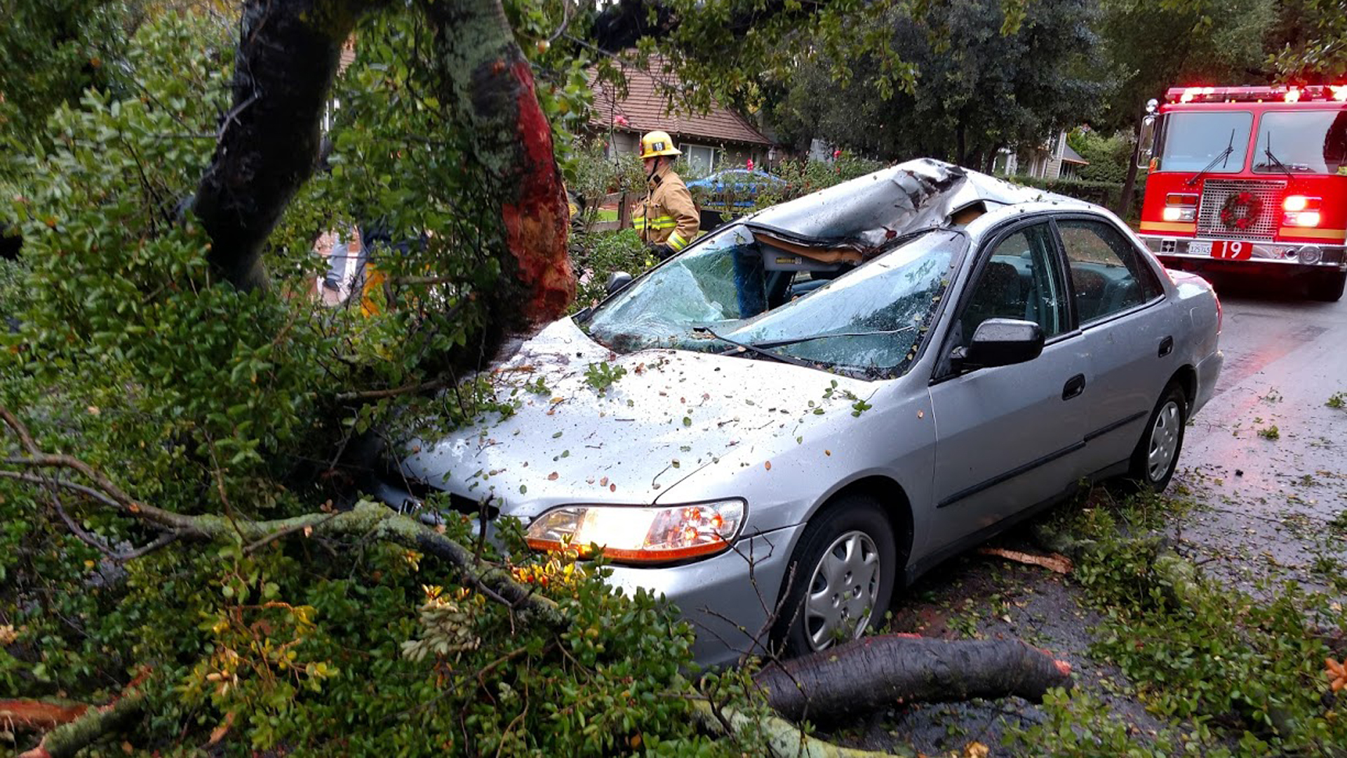 A tree toppled onto a car in La Canada Flintridge on Dec. 23, 2019. The driver escaped unharmed. (Credit: Los Angeles County Sheriff's Department)