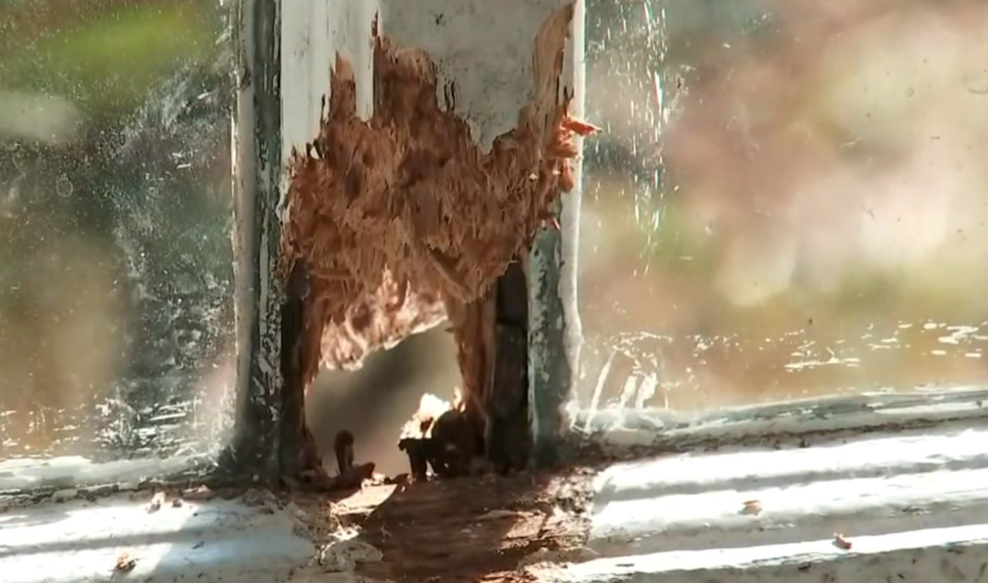 A squirrel ran throughout a family's house for a week, causing extensive damage. (Credit: CNN)