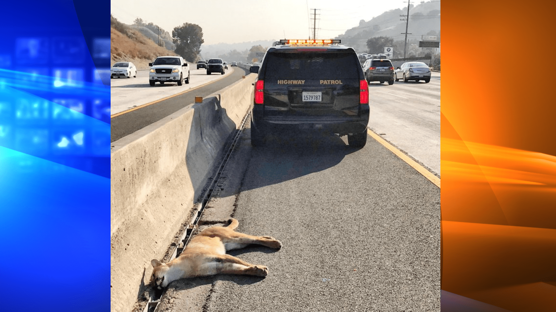 The California Highway Patrol's West Valley division tweeted this image of a mountain lion's body on the 101 Freeway in Calabasas on Sept. 23, 2020.