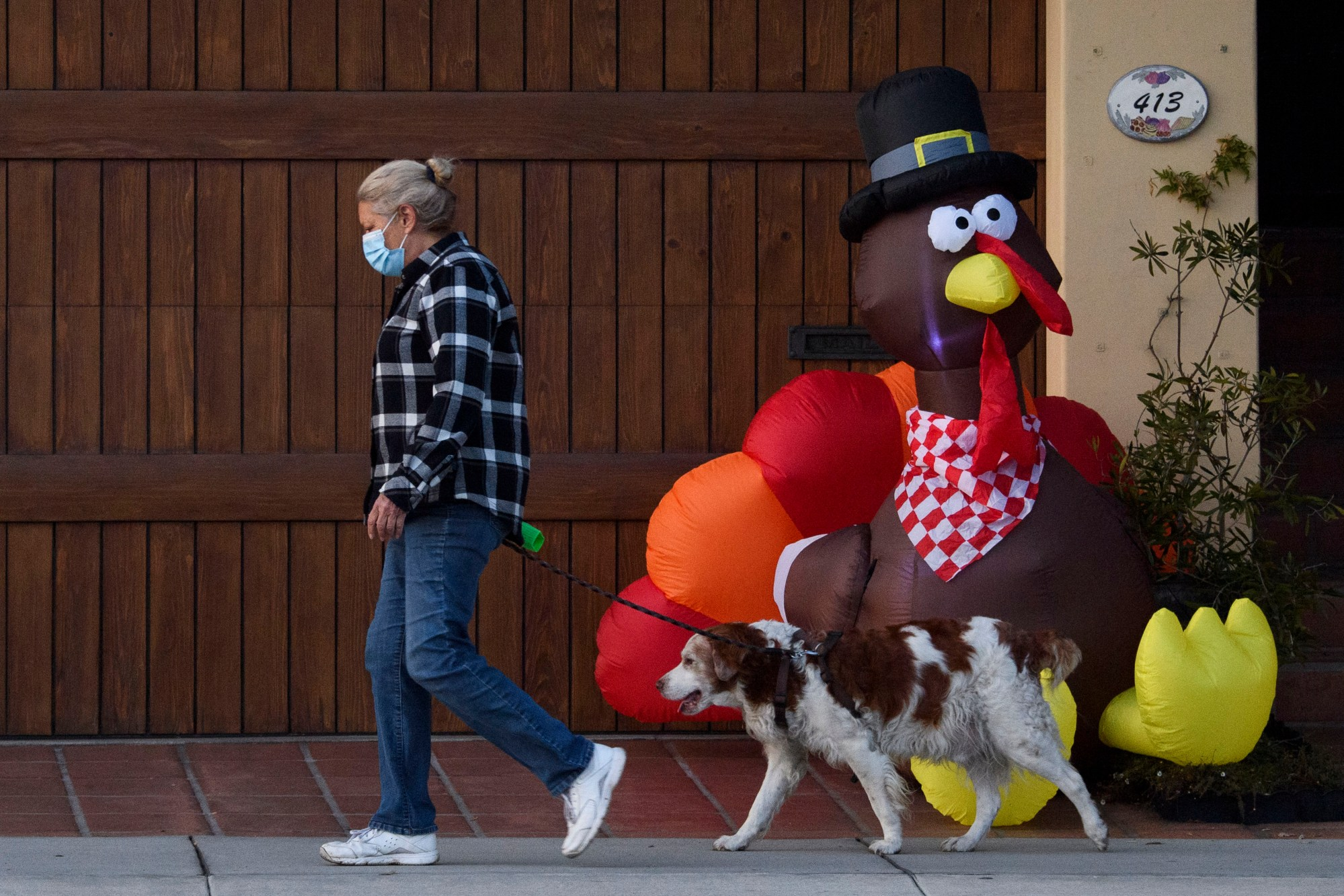 A pedestrian wearing a face mask walks their dog past an inflatable turkey in Manhattan Beach ahead of the Thanksgiving holiday on Nov. 21, 2020. (PATRICK T. FALLON/AFP via Getty Images)