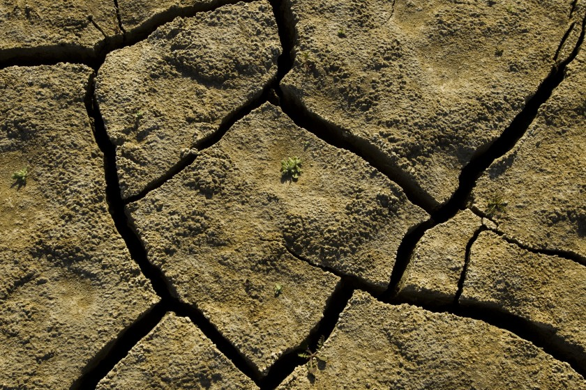 "A tiny plant struggles to emerge from a cracked, dry lake bed in California. Some researchers believe the region is decades into an emerging ""megadrought"" (Allen J. Schaben / Los Angeles Times)"