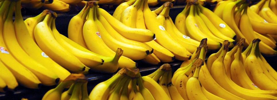 Laptopy i banany na jednym drzewie