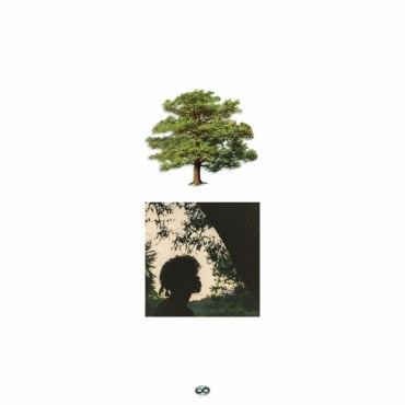 White background surrounding a tree and a square of Trapo under the Shade